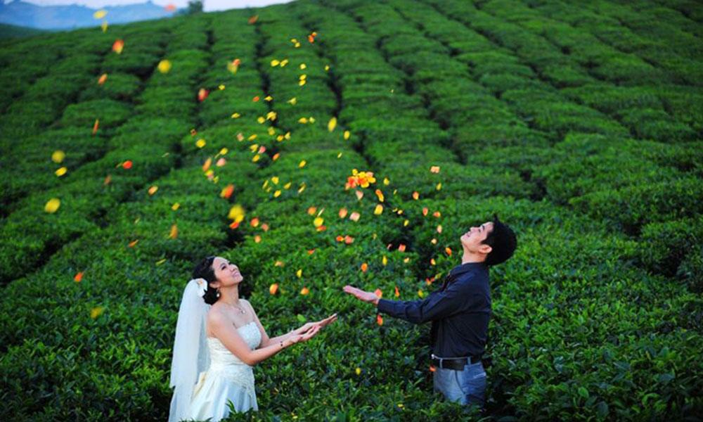 Top 10 địa điểm chụp ảnh cưới đẹp dịp cuối năm - Cao nguyên Mộc Châu (Sơn La)