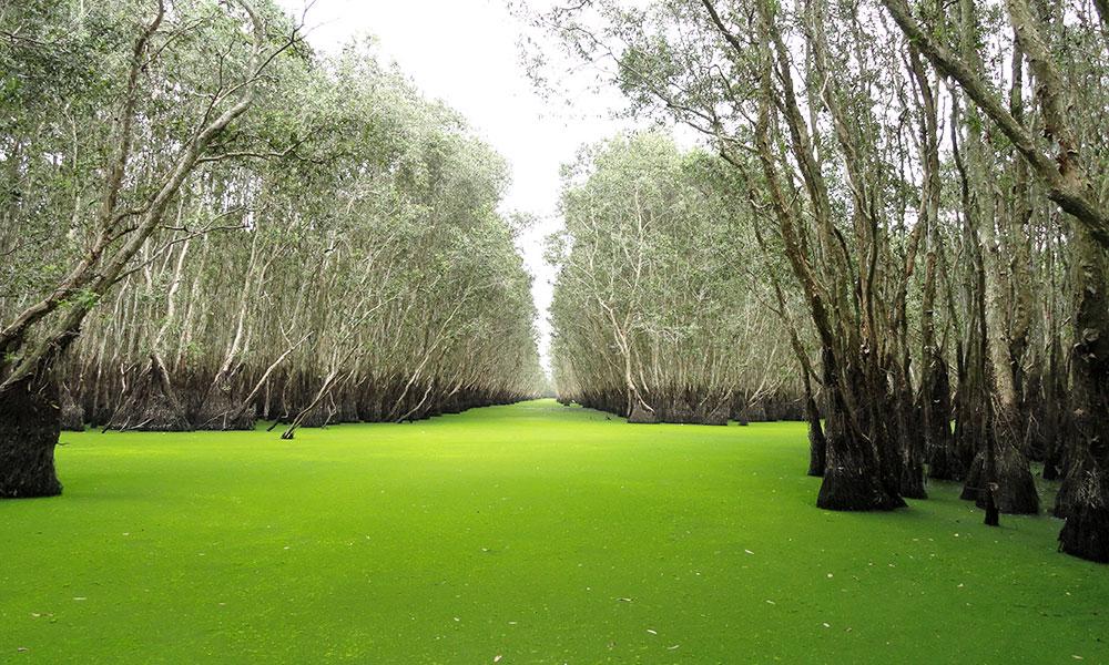 Địa điểm chụp ảnh cưới đẹp ở Miền Tây - Rừng tràm Trà Sư (An Giang)