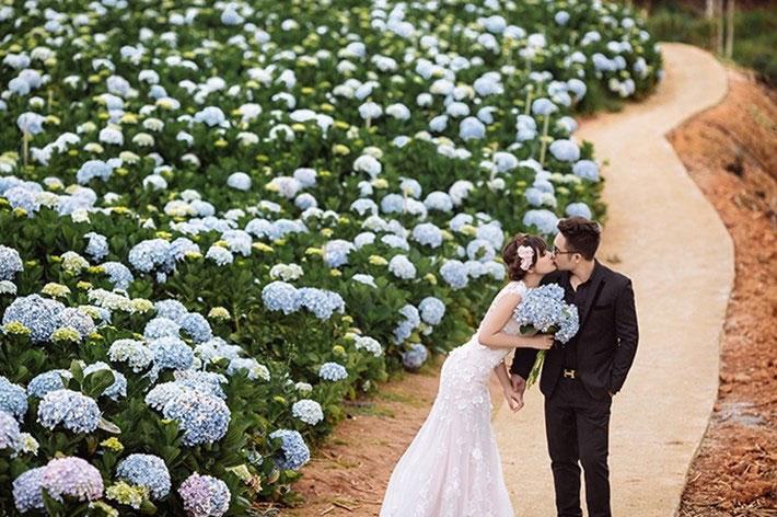 Địa điểm chụp ảnh cưới đẹp ở Đà Lạt - Cánh đồng hoa Cẩm Tú Cầu
