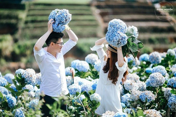 Địa điểm chụp ảnh cưới đẹp ở Đà Lạt - Đồi chè Cầu Đất