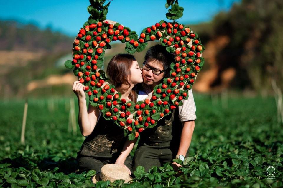 Địa điểm chụp ảnh cưới đẹp ở Đà Lạt - vườn Dâu Đà Lạt