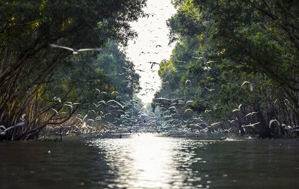 Địa điểm chụp ảnh cưới đẹp ở Đồng Tháp - KDL sinh thái Gáo Giồng