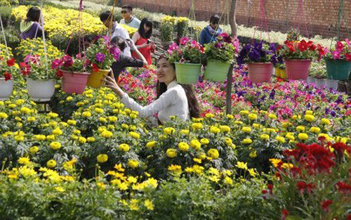 Địa điểm chụp ảnh cưới đẹp ở Đồng Tháp - Làng hoa Sa Đéc