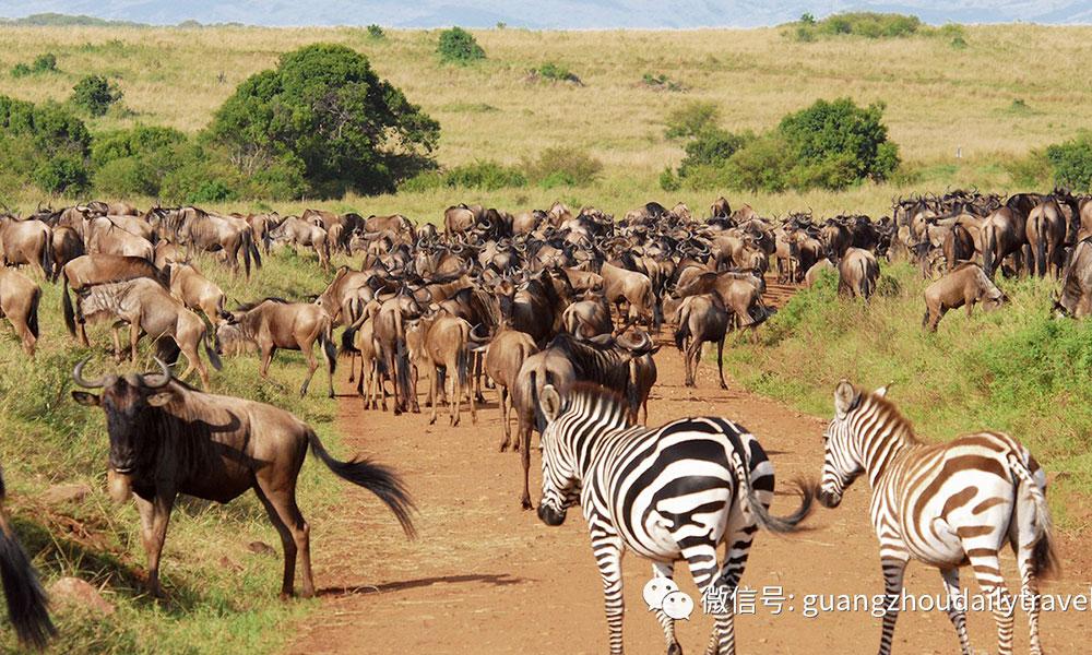 Tuần trăng mật  Nên đi du lịch ở đâu - Kenya (Đông Phi)